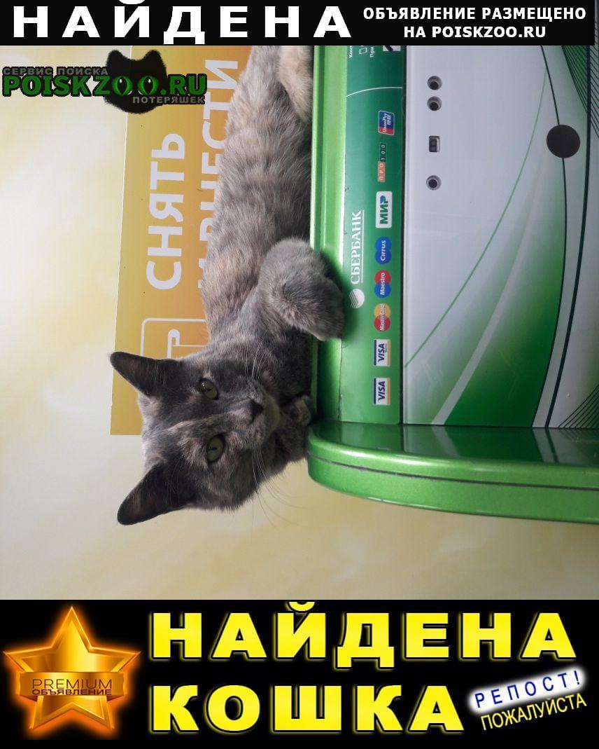 Найдена кошка Хабаровск
