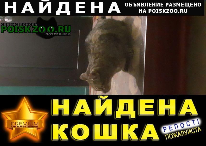 Найден кот Омск