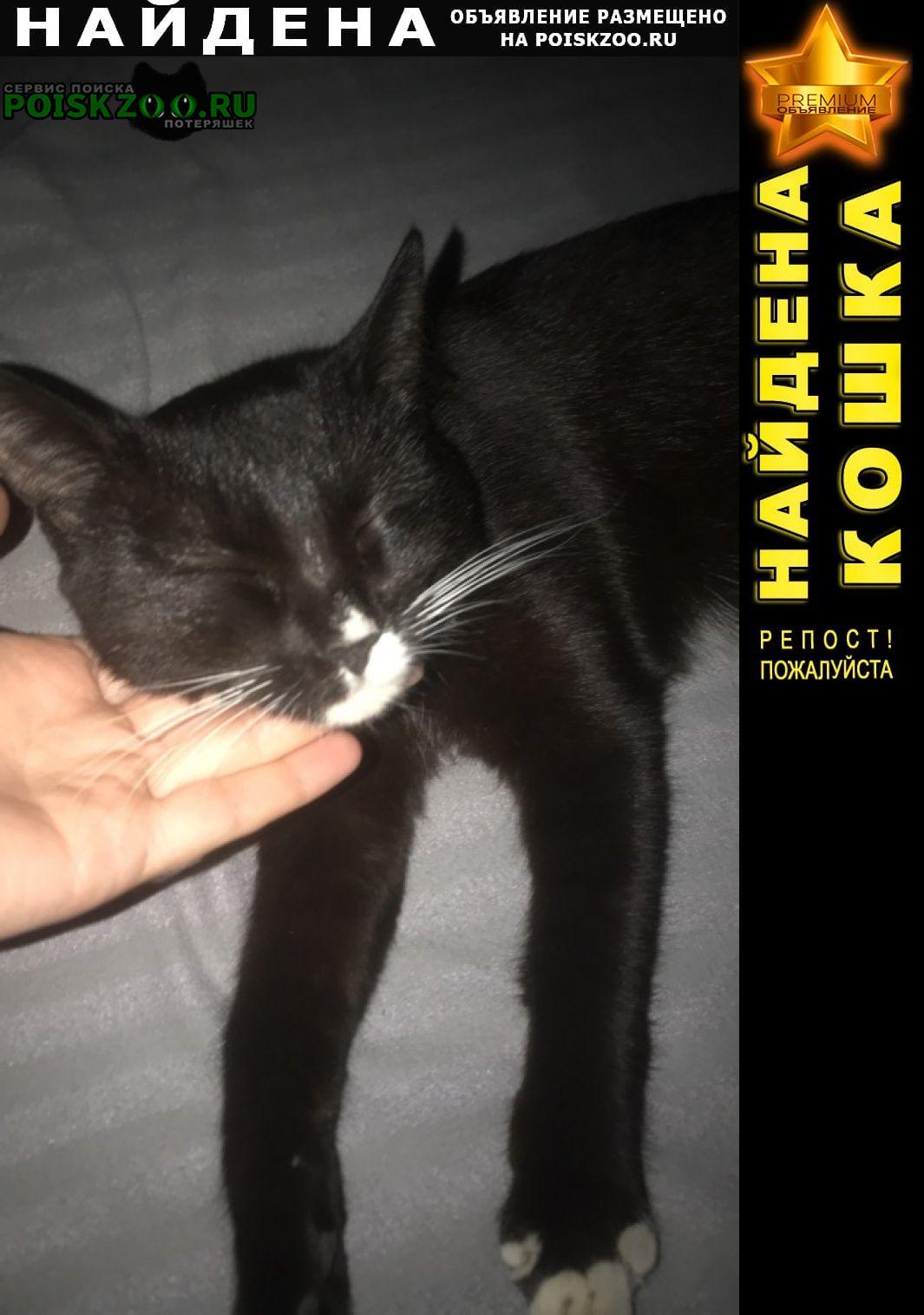 Найдена кошка малиновского 10 13 января 2021 Волгоград