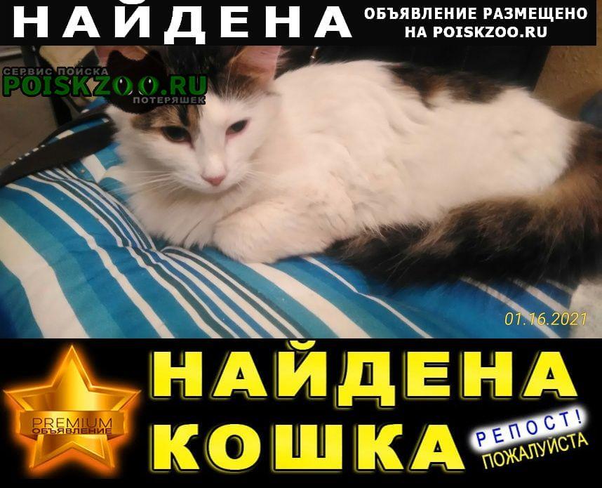 Найдена кошка на улице мебельная. Санкт-Петербург