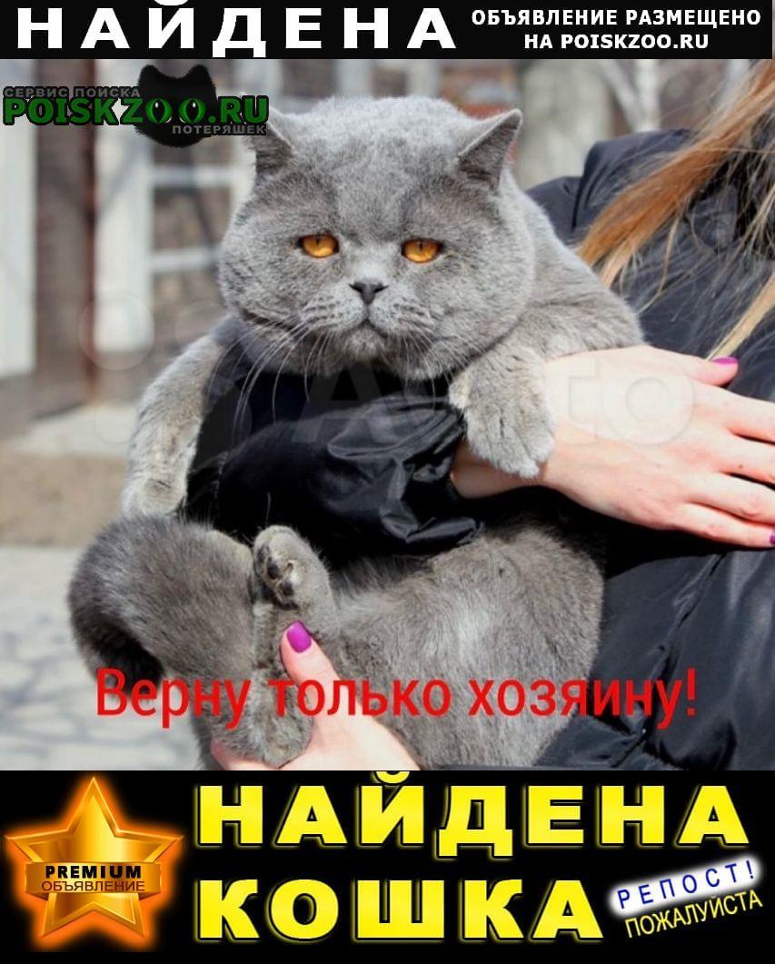 Найден кот Таганрог