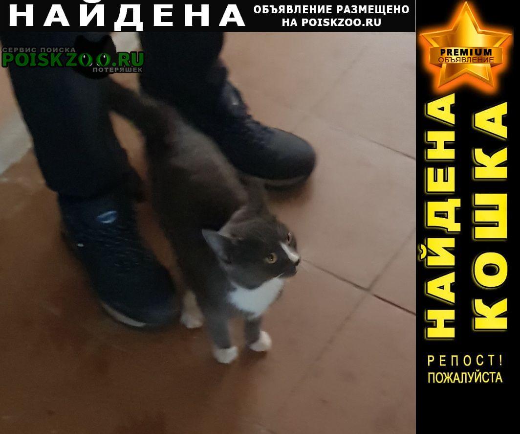 Найдена кошка Сургут