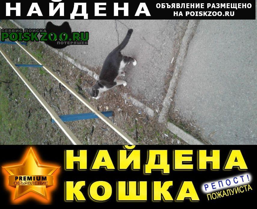 Найден котик Ростов-на-Дону