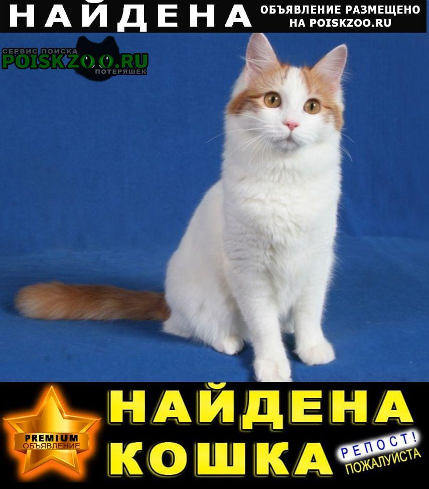 Найдена кошка, турецкая ван Реутов