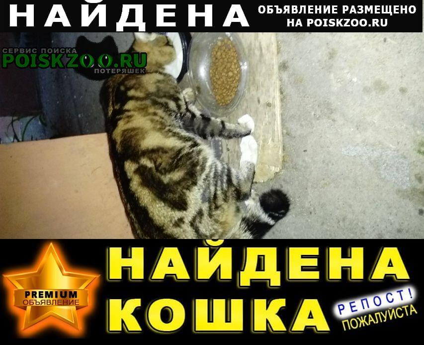 Найден кот молодой, окрас мраморный, типа бенг, Омск
