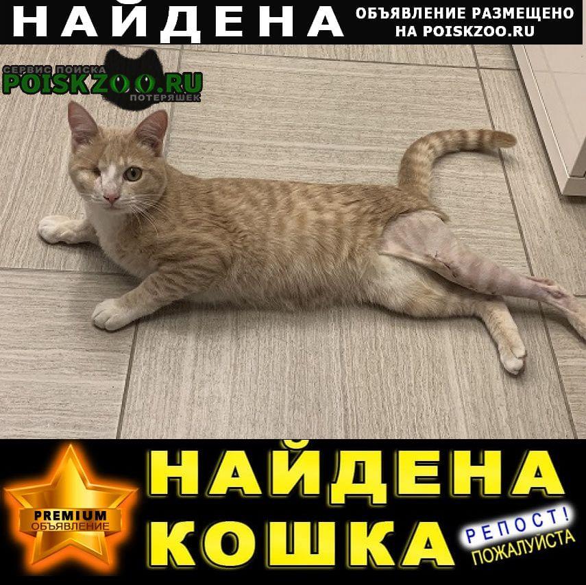 Найден кот в Одинцово