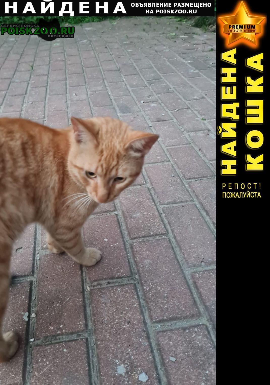Найден кот рыжий Мытищи