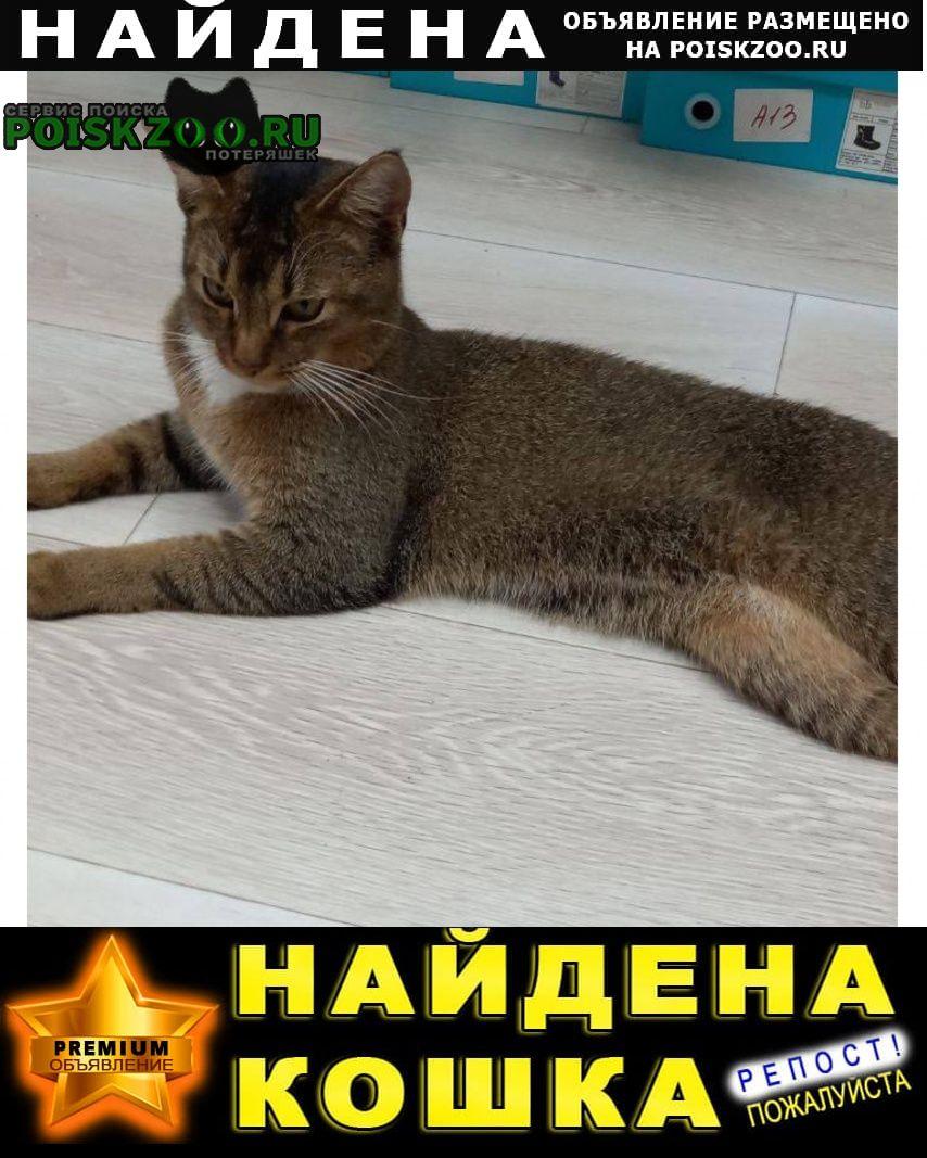 Найден кот похож на абиссинца Красногорск