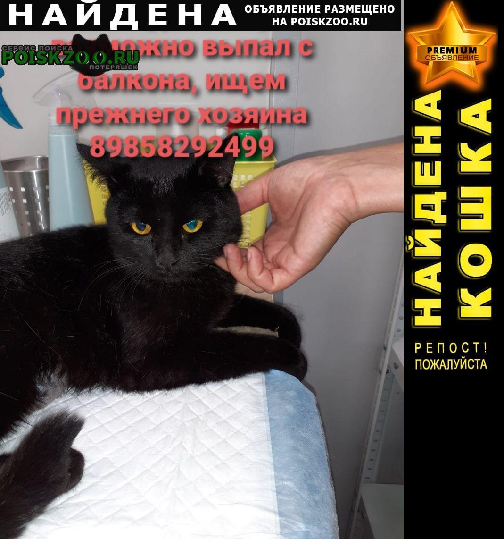 Найден кот молодой Мытищи