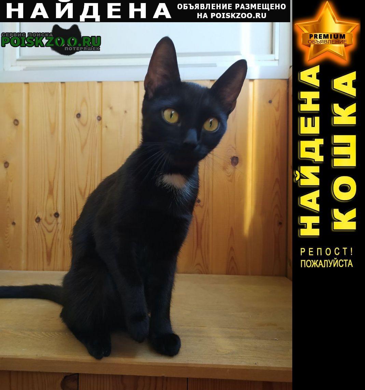 Найдена кошка домашняя, черная, на груди белое пятно Новосибирск