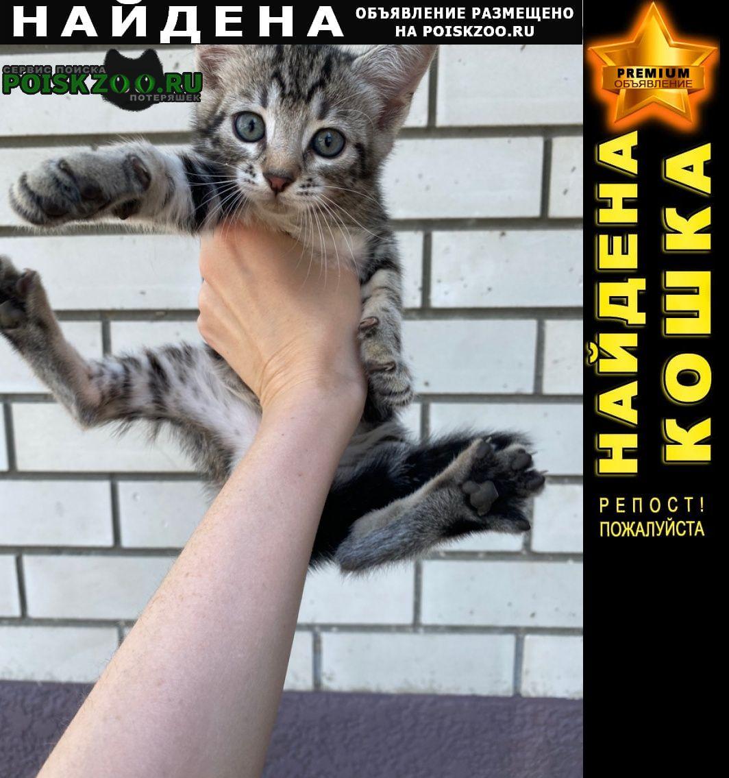 Найден кот -малыш Краснодар