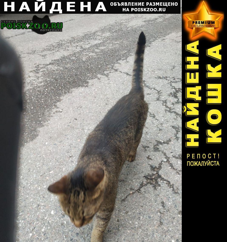 Найден кот домашний Санкт-Петербург