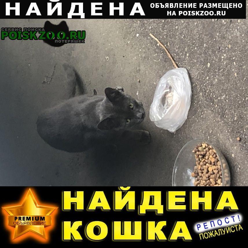 Найдена кошка кот? ? Москва