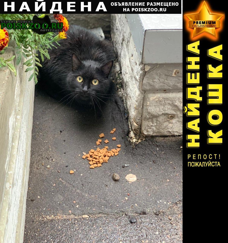 Найден кот черный кастрированный Видное