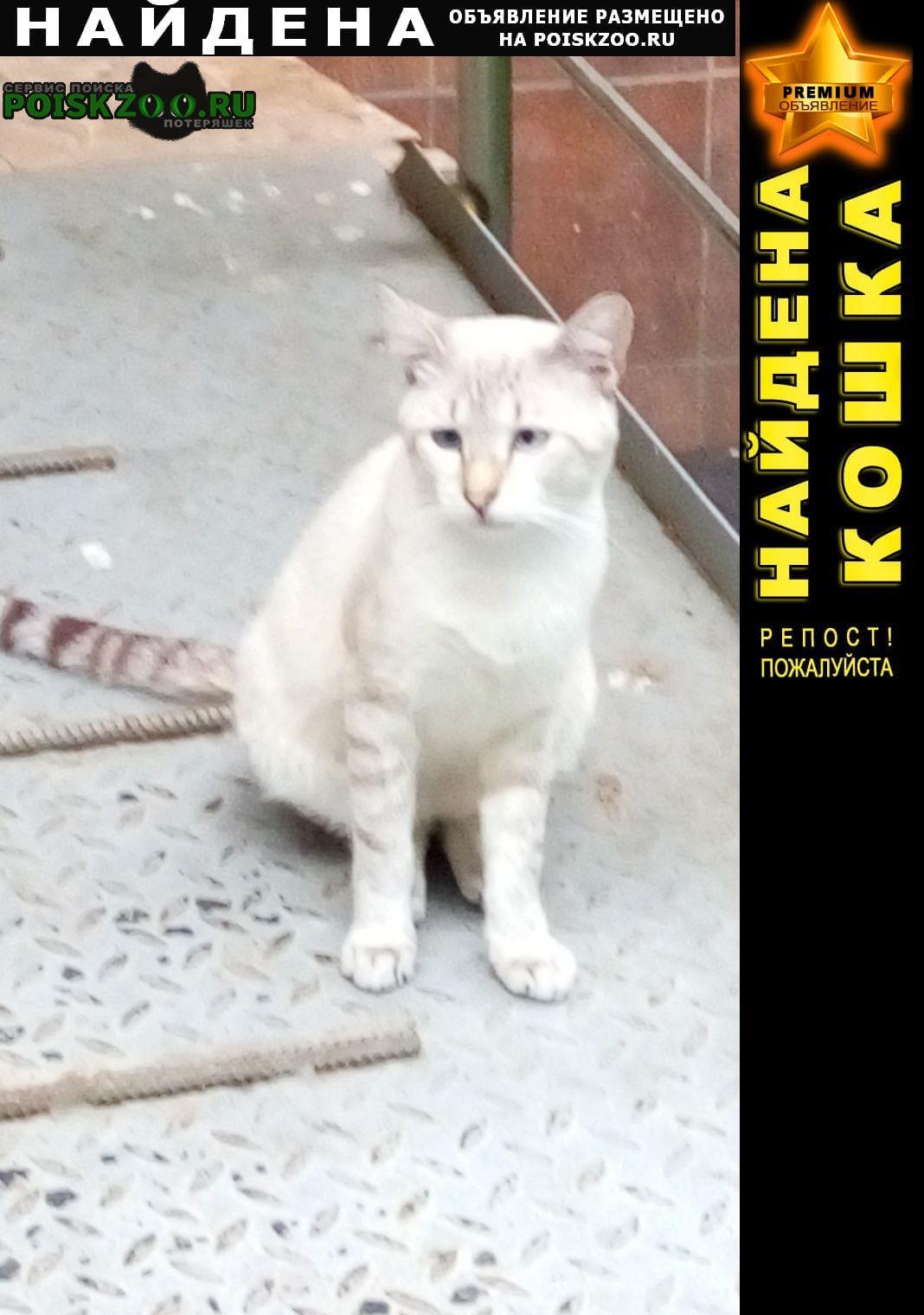 Краснодар Найден кот фмр