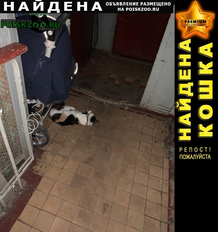 Найдена кошка в ошейнике Москва