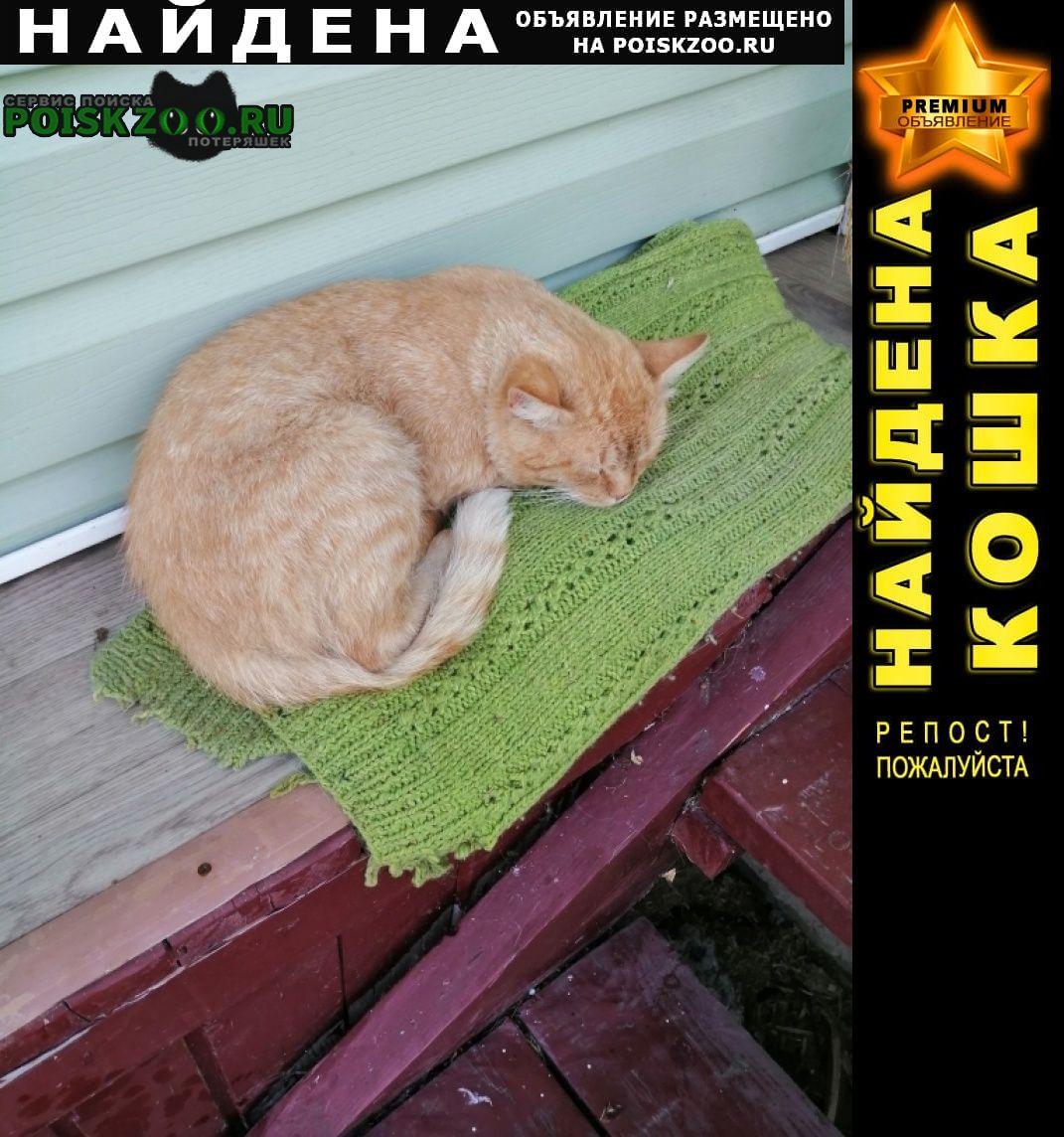 Найден кот рыжий молоденький ик (6-7 мес) Звенигород