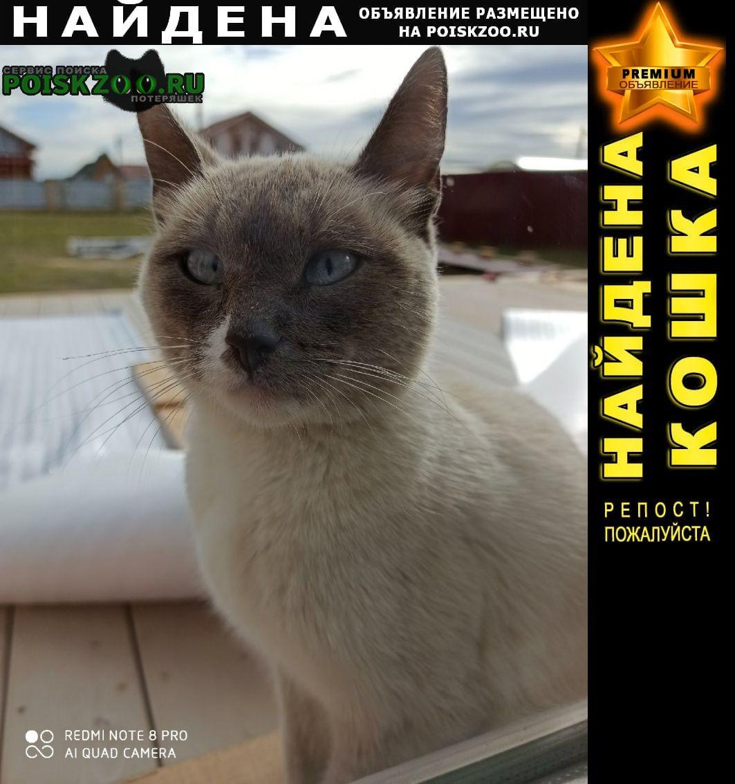 Найдена кошка, Новочебоксарск