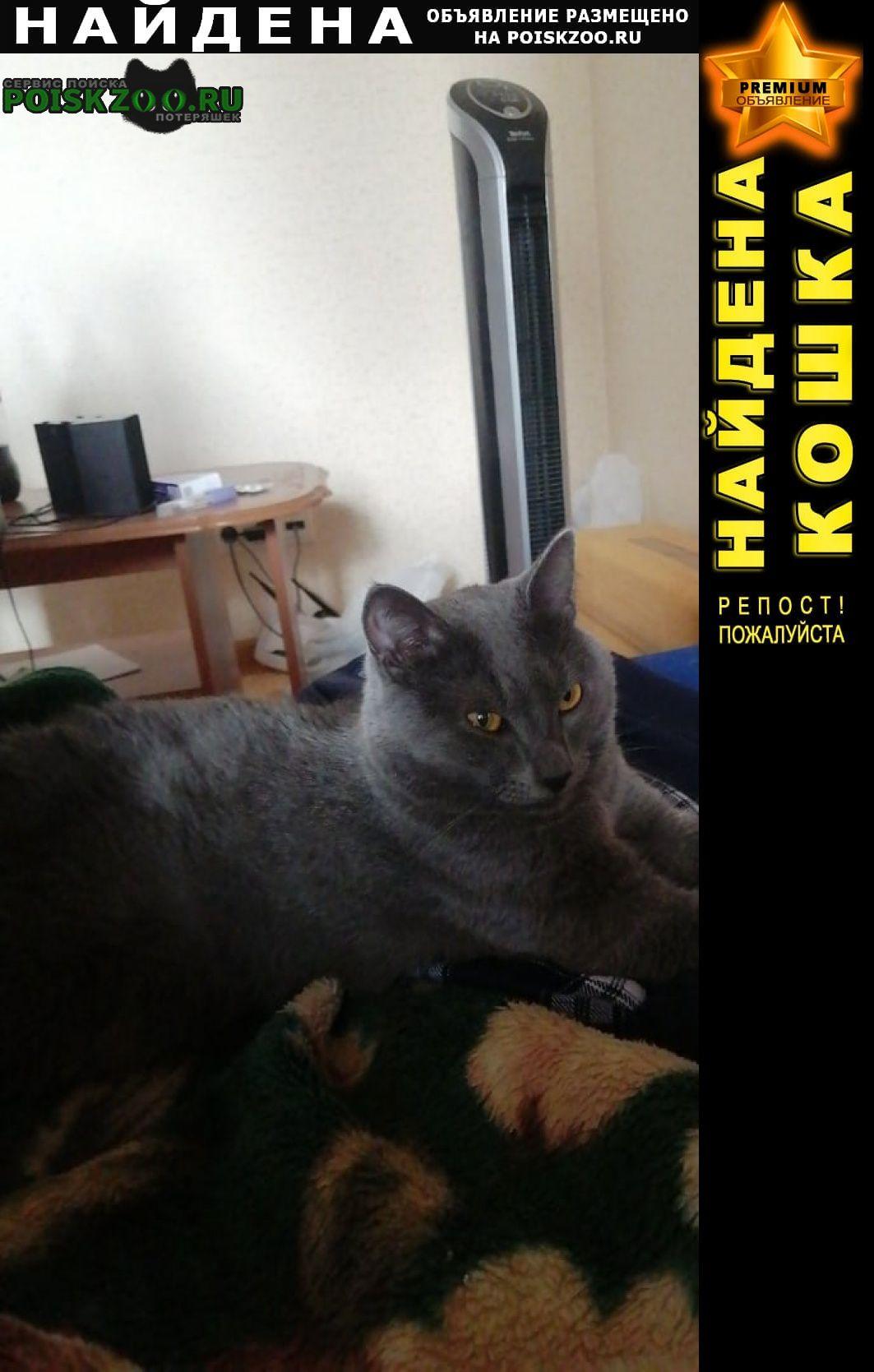 Найдена кошка кот Тюмень