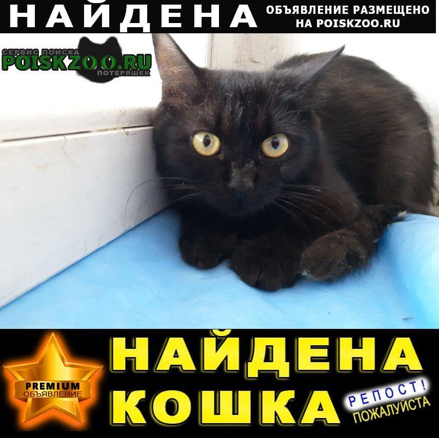 Красногорск Найдена кошка черная
