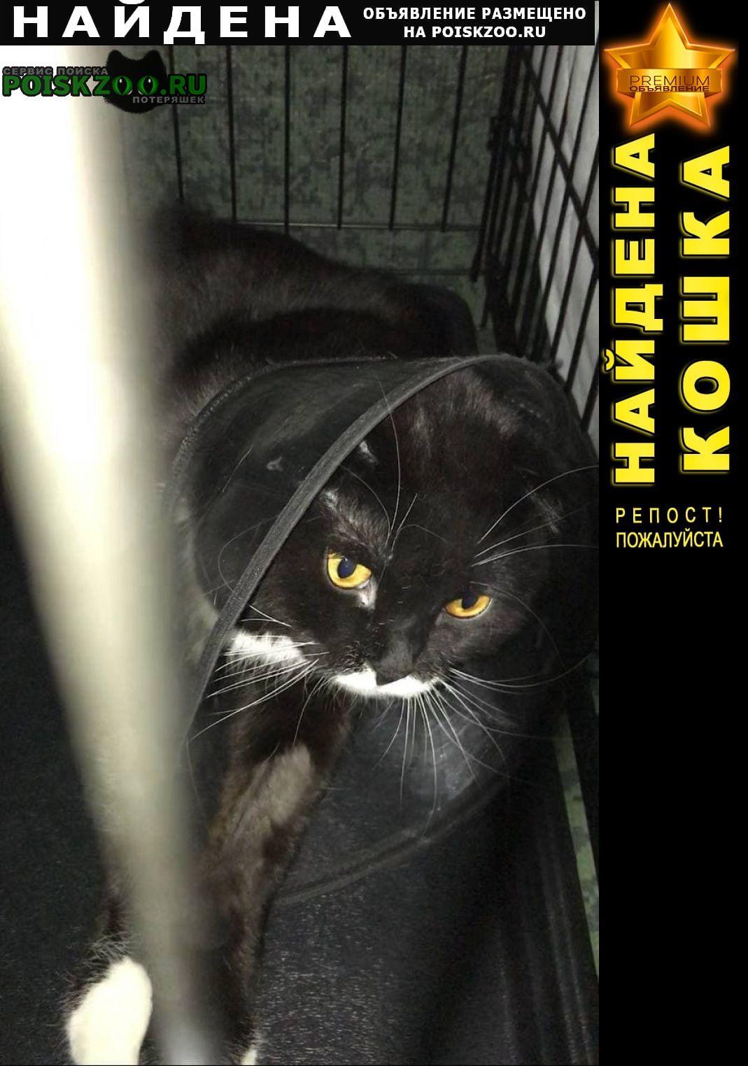 Найден кот спасёныш Краснодар