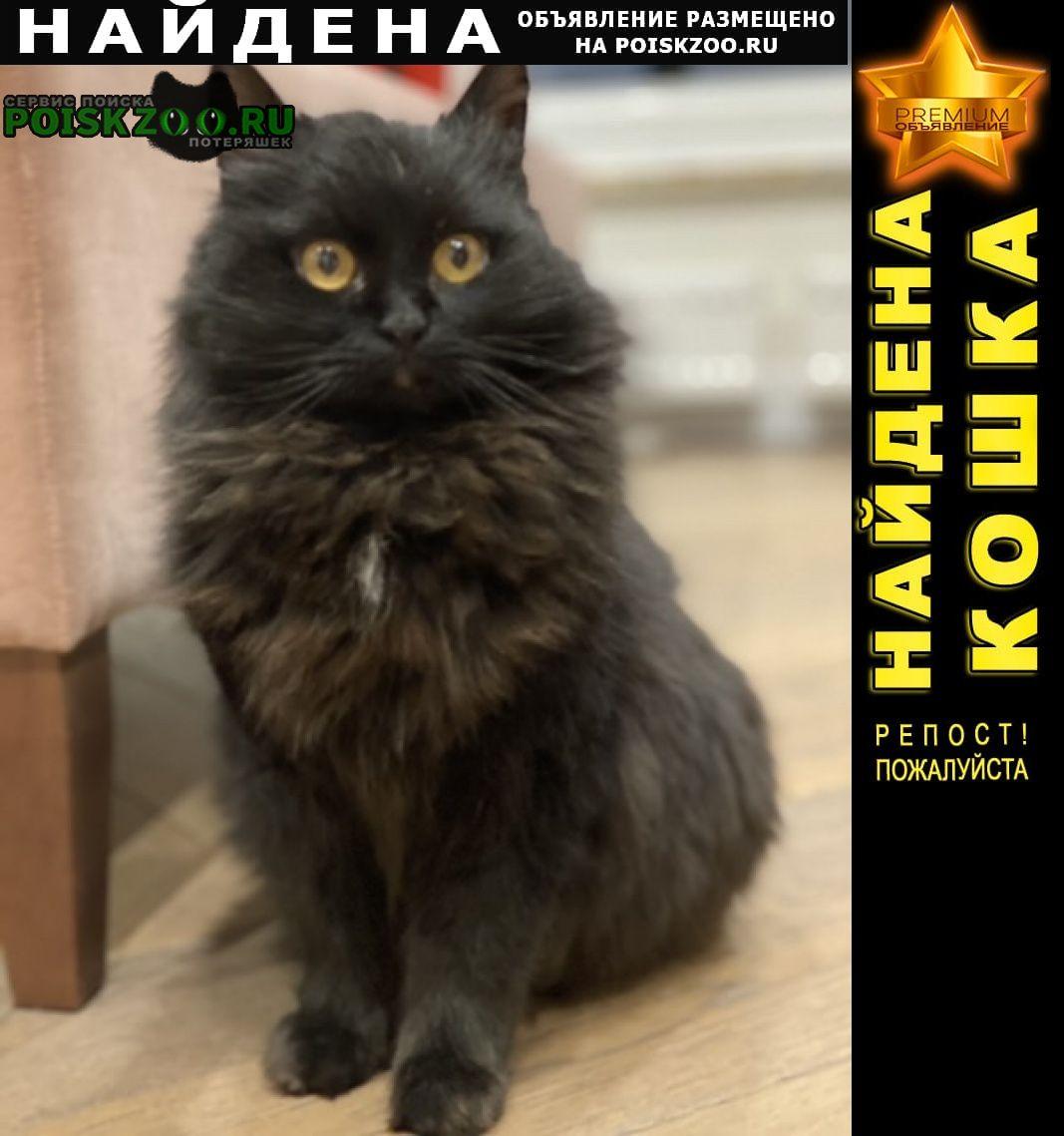 Найдена кошка чёрная Москва