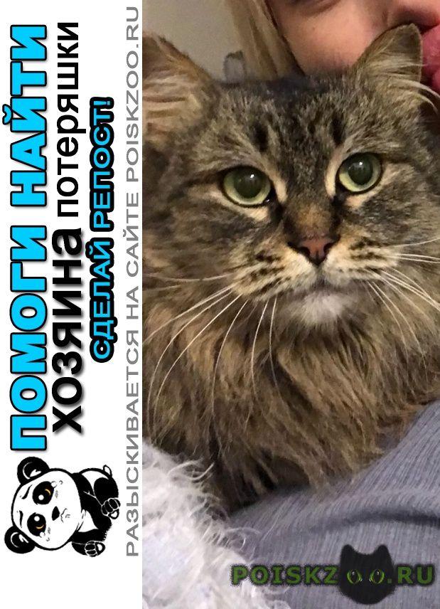 Найден кот г.Пушкино