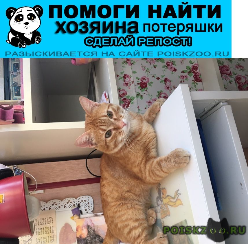 Найден кот рыжий, г.Москва
