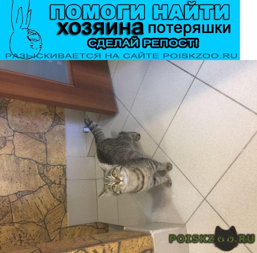 Найдена кошка сибирская домашняя г.Барнаул