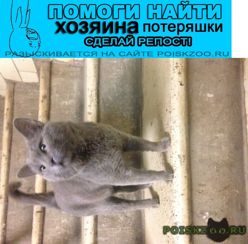 Найден кот жилой комплекс акварели г.Балашиха