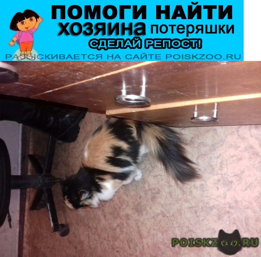 Найдена кошка г.Кетово