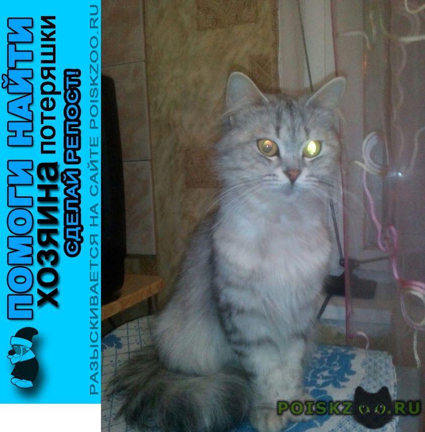 Найдена кошка г.Кострома