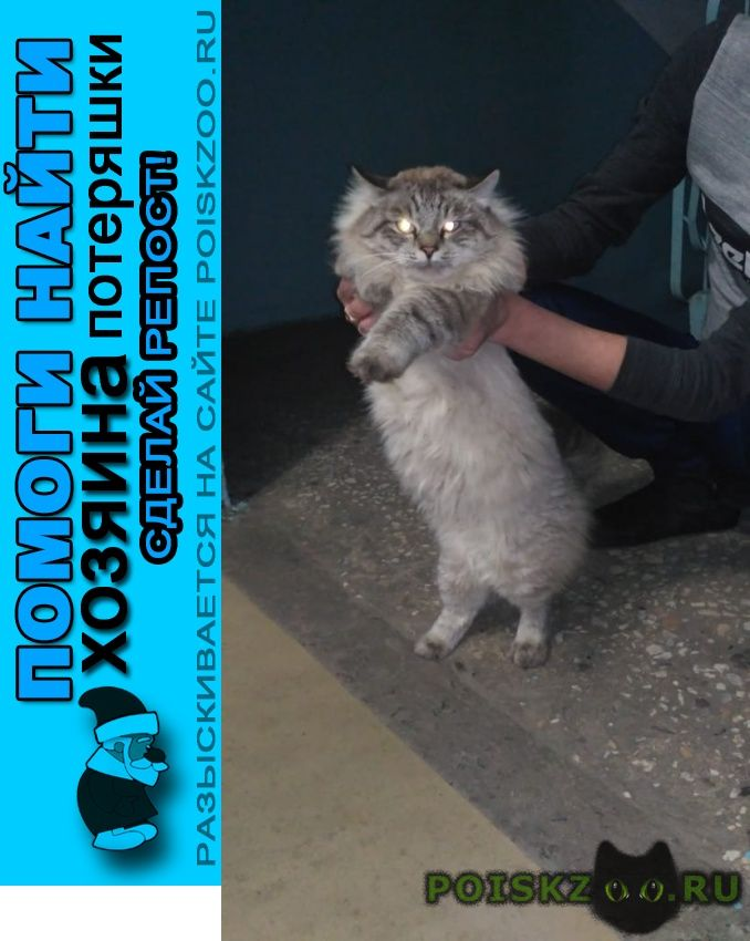 Найдена кошка г.Тамбов