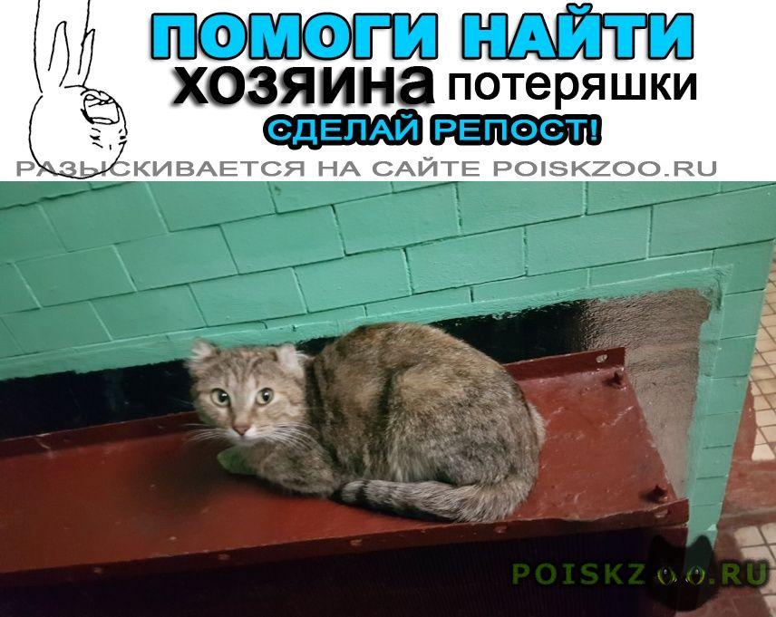 Найдена кошка новогиреево г.Москва