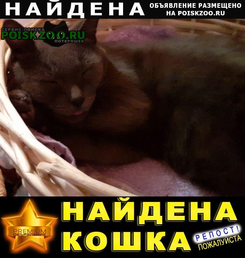 Найдена кошка русская голубая порода (фенотип) Краснодар
