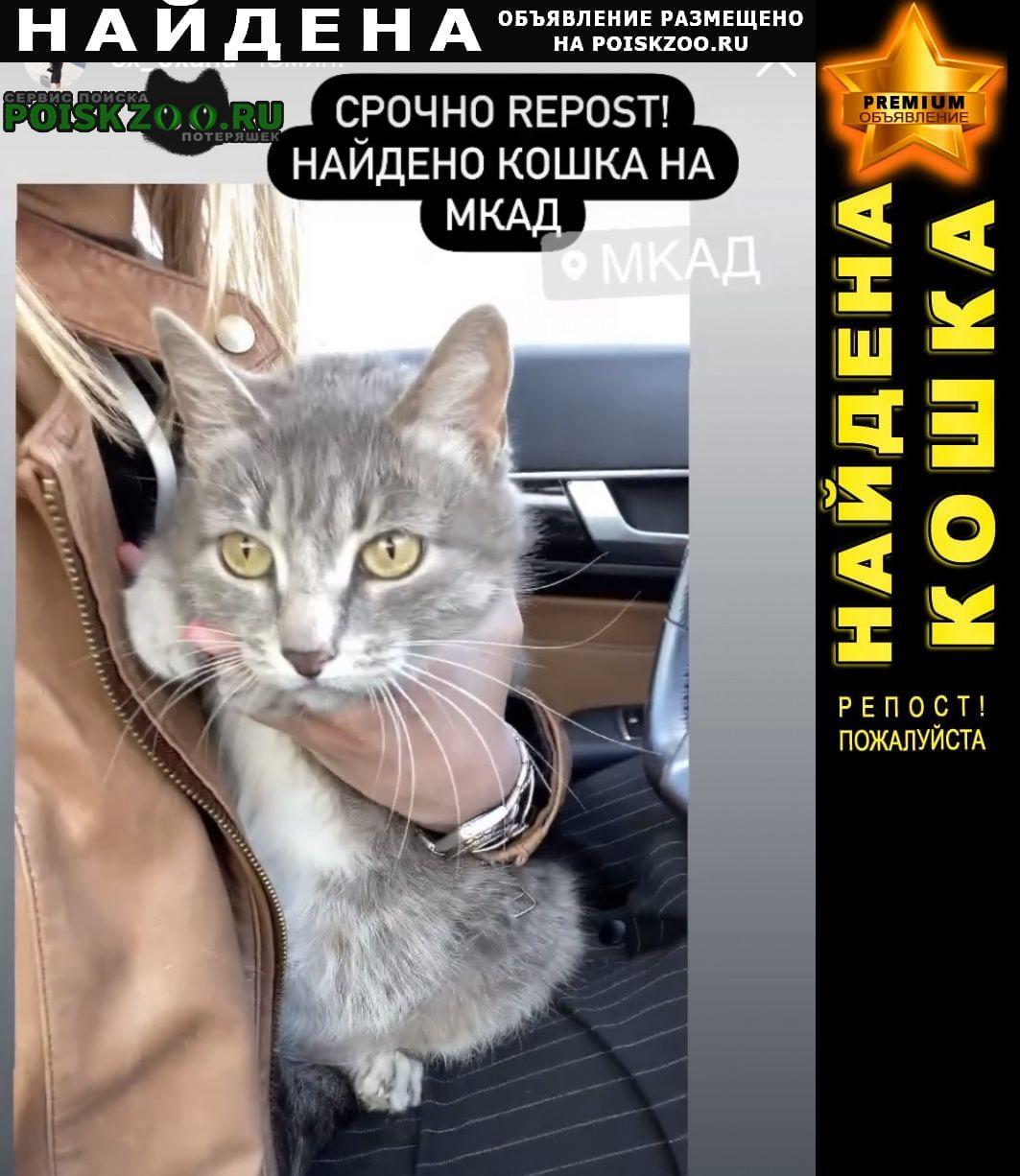 Найдена кошка серая в ошейнике Москва