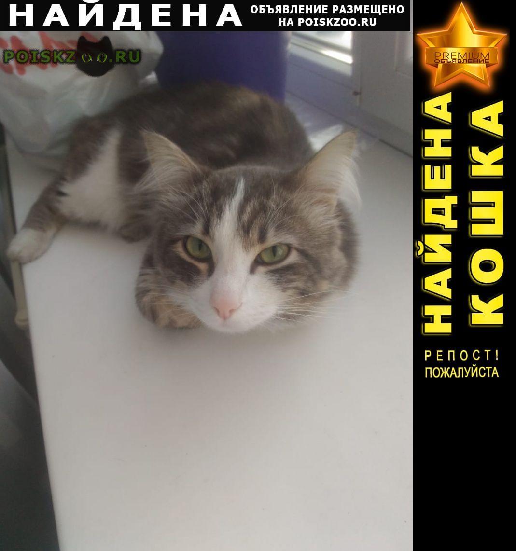 Найдена кошка г.Новосибирск