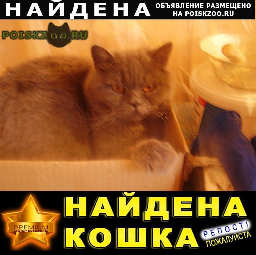Найден кот британец г.Уфа