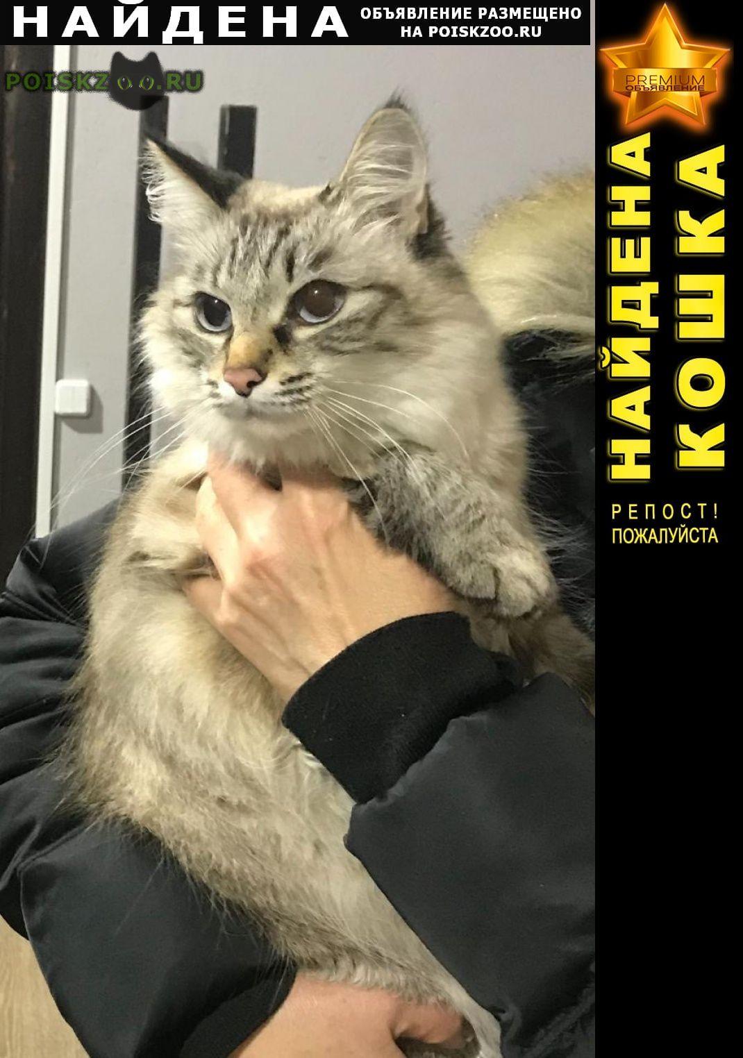 Найдена кошка г.Раменское