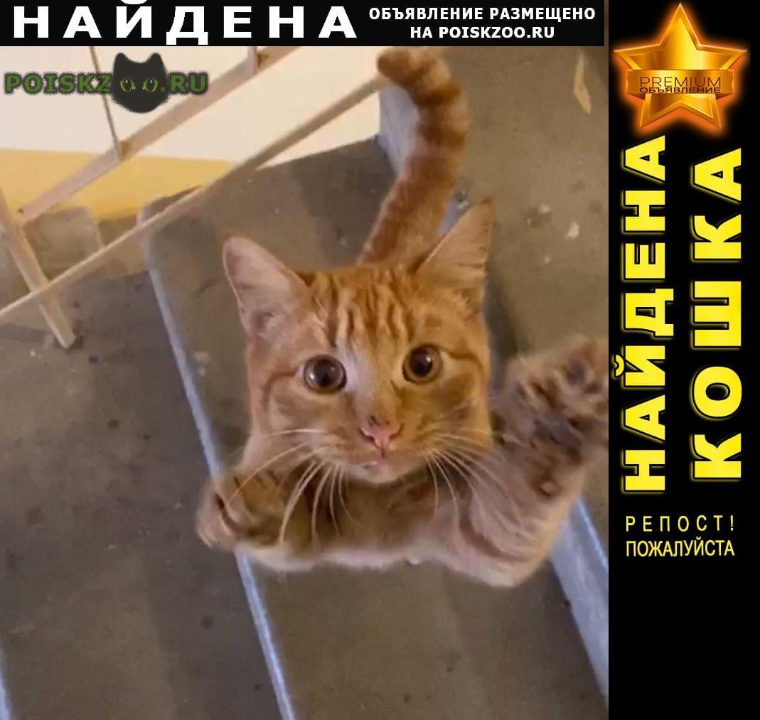 Найдена кошка меридианная 14 Казань