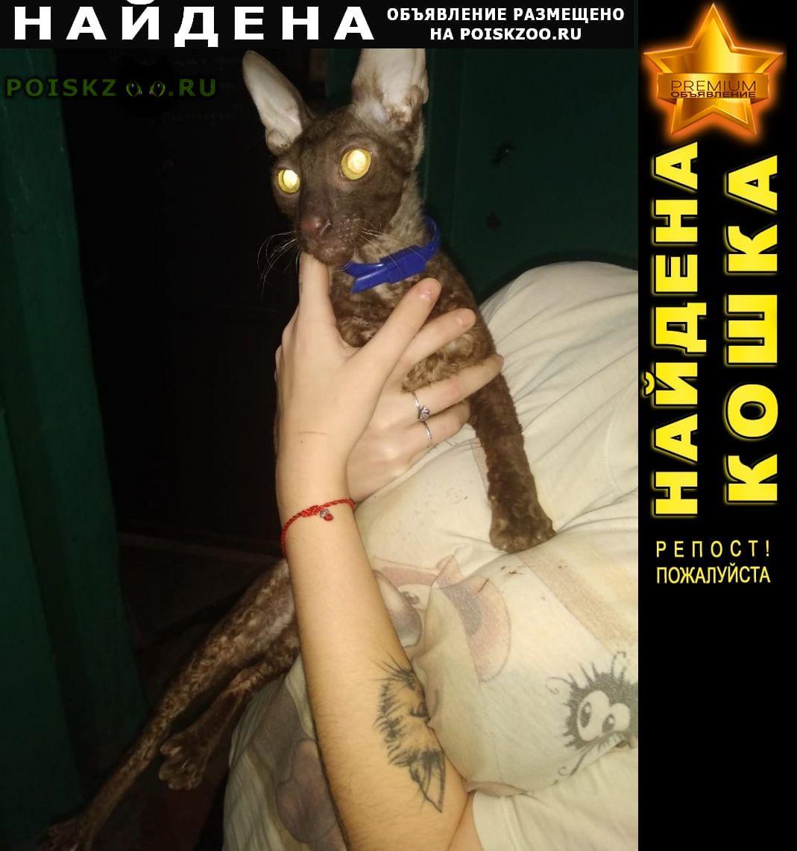 Найден кот корниш рекс г.Волгоград