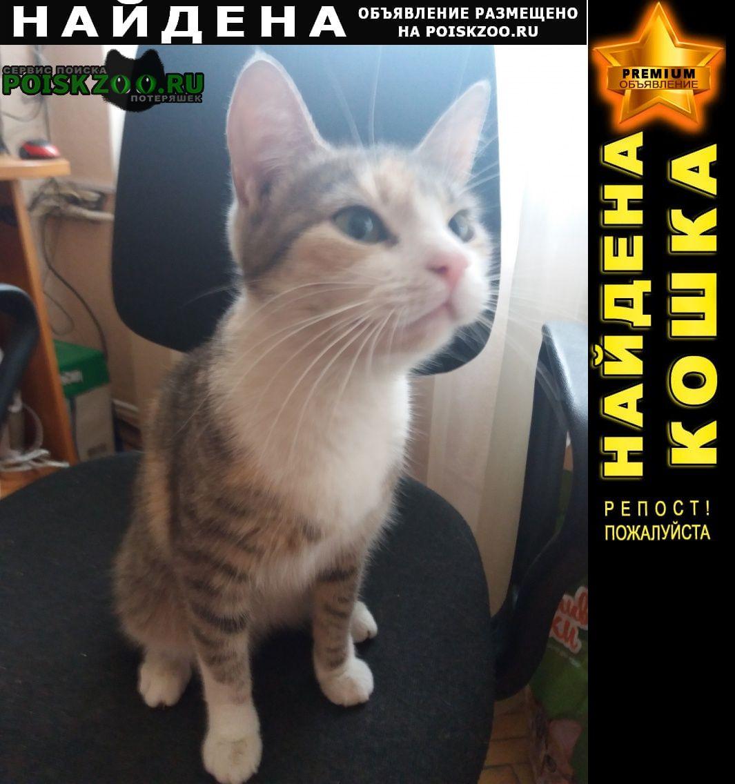 Найдена кошка возраст примерно 6 месяцев Санкт-Петербург