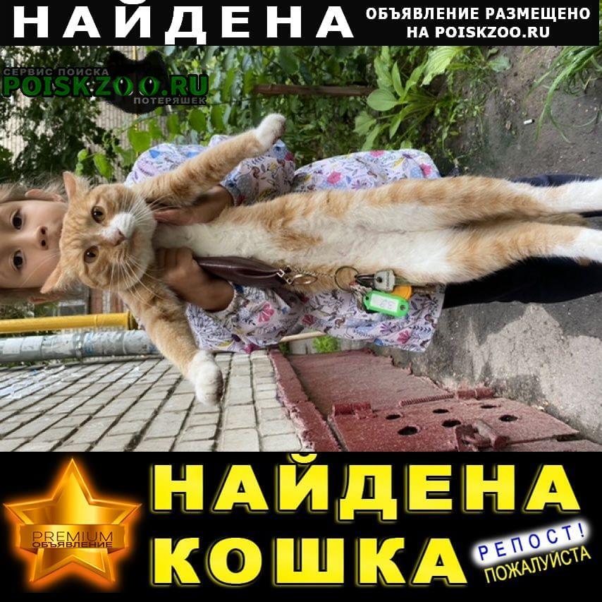 Найден кот автозаводский район рыжий Нижний Новгород