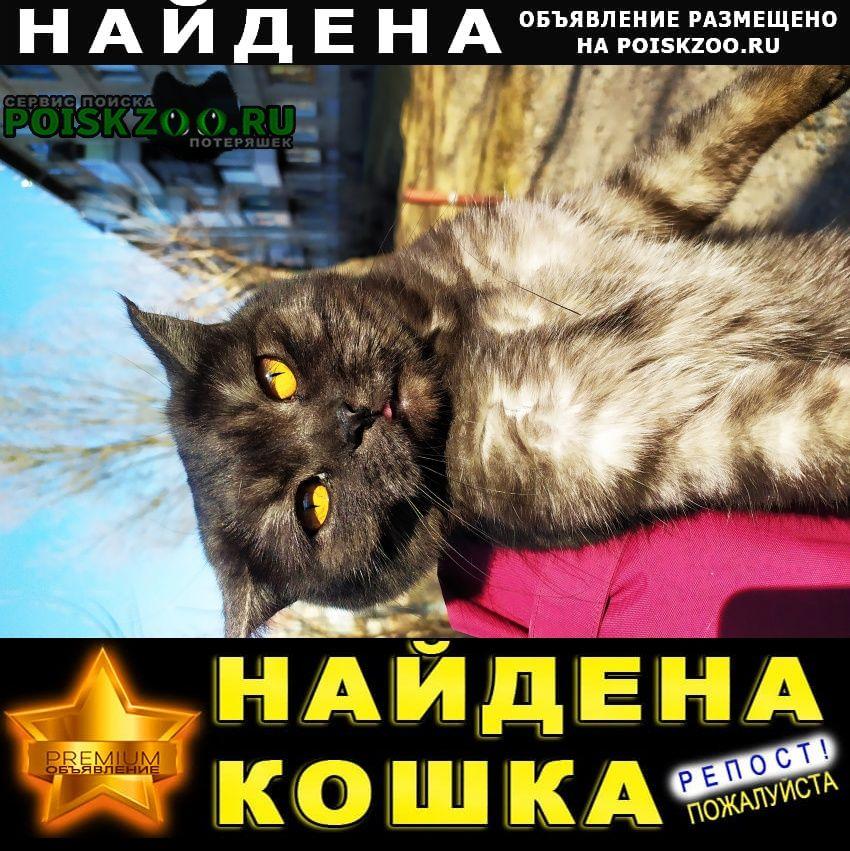 Найдена кошка г.Красноярск