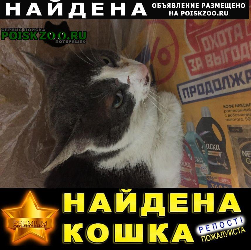 Найден кот.истринский район, деревня пав Истра
