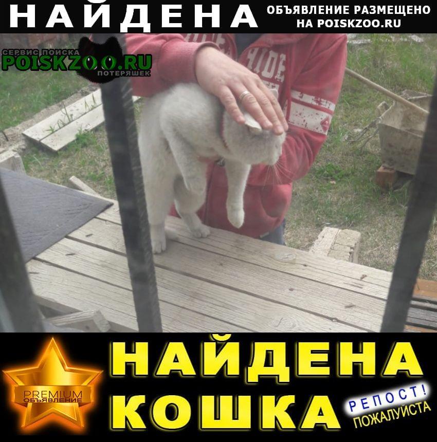 Найден кот Ставрополь