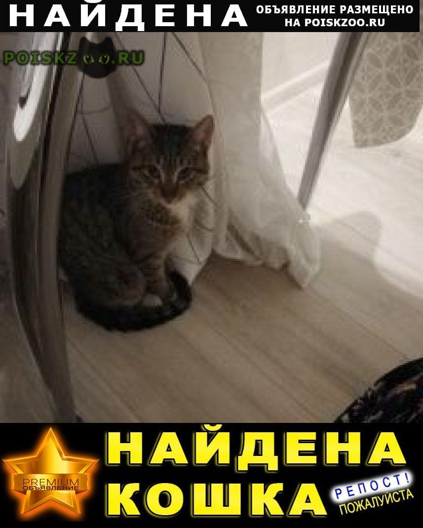 Найдена кошка г.Химки