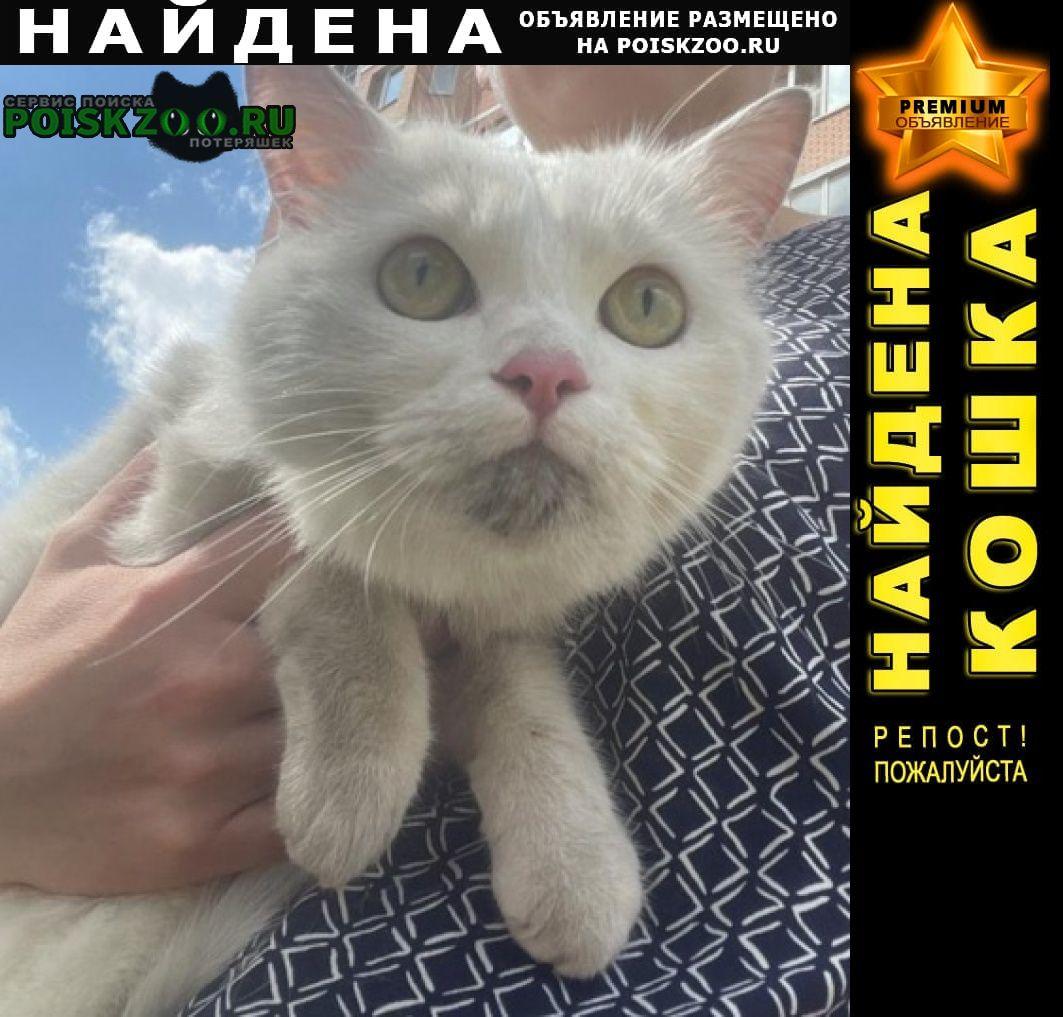 Найдена кошка белая, желтые глаза, молодая Подольск