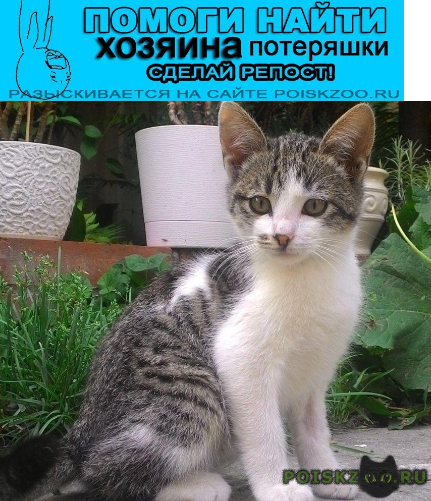 Найден котёнок alex ищет лучших хозяев г.Ростов-на-Дону