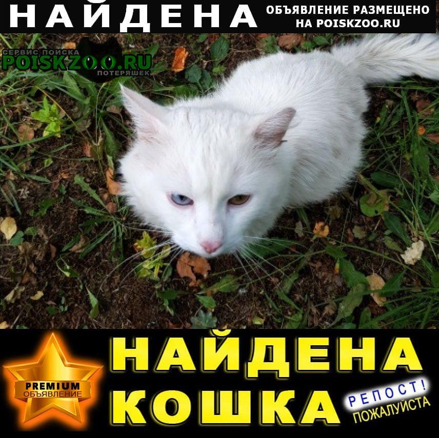 Найдена кошка белый кот- дер. пенкино Зарайск